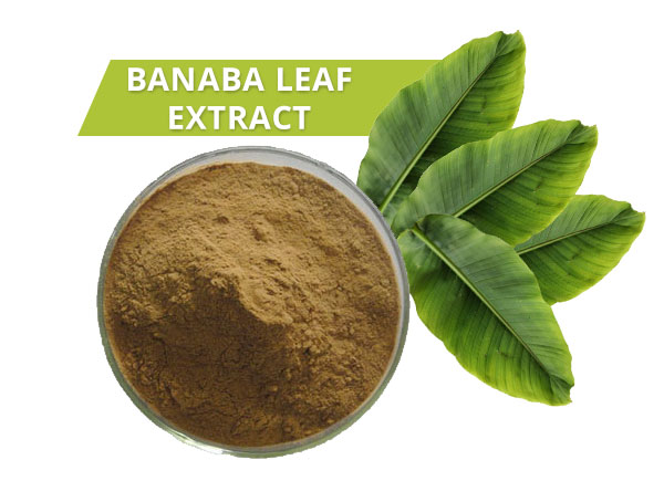 how to use banaba leaf extract to lower your blood sugar
