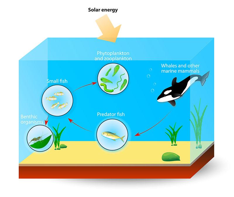 photosynthesis_ocean