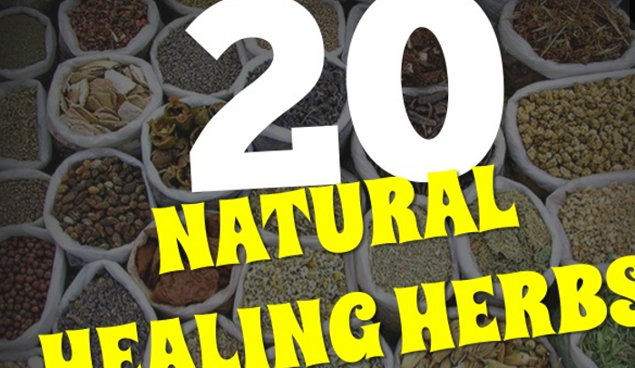 20 Top Natural Healing Herbs and Spices
