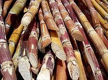 Policosanol_sugarcane