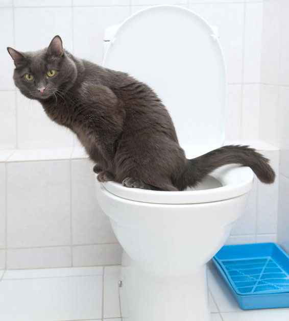 diabetes-frequent-urination