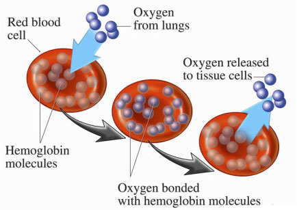 oxygen-to-cells