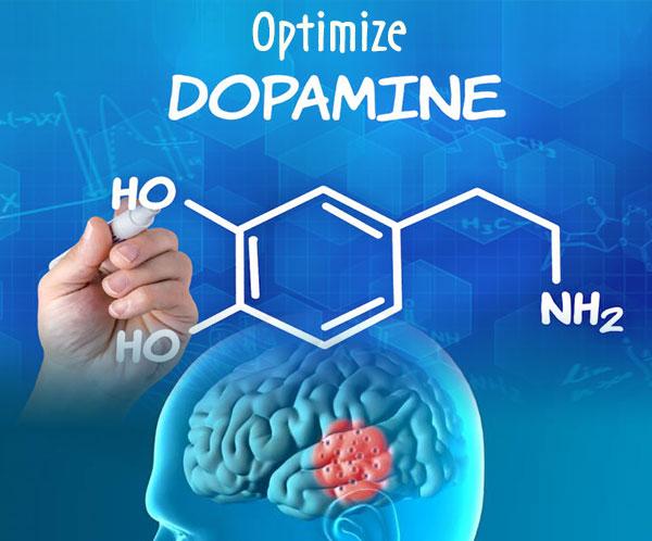Optimizer-Dopamine