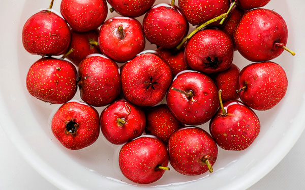 English-Hawthorn-Berries
