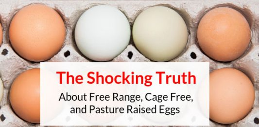 The Shocking Difference Between White & Brown Eggs
