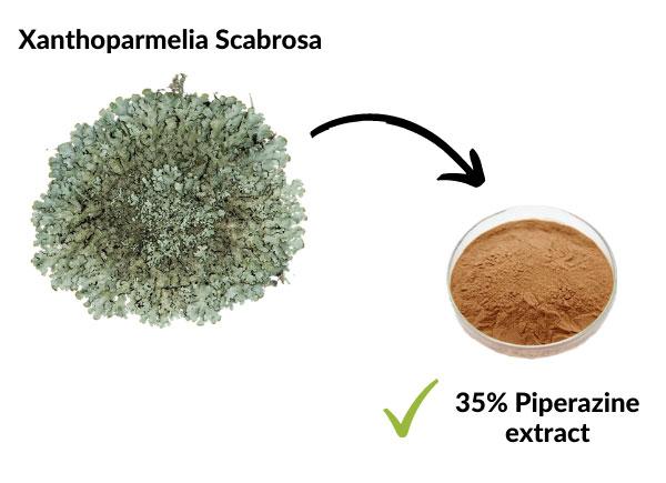 Xanthoparmelia Scabrosa