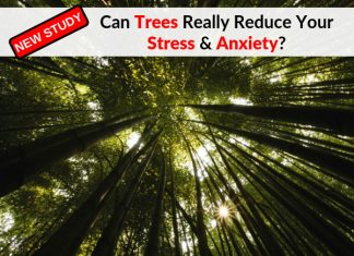 Can Trees Really Reduce Your Stress & Anxiety?