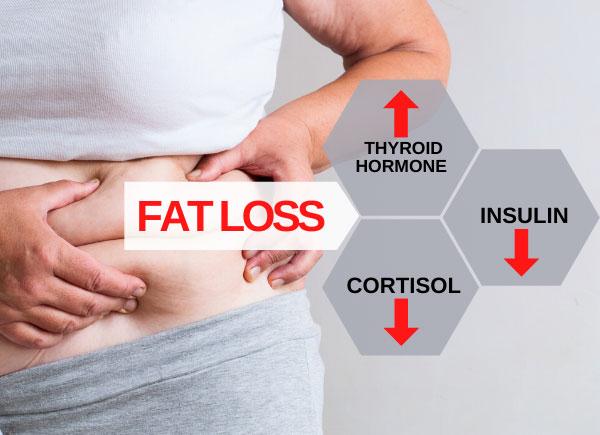 fat loss hormones 1