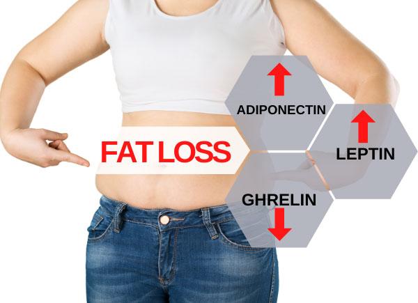 fat loss hormones 2